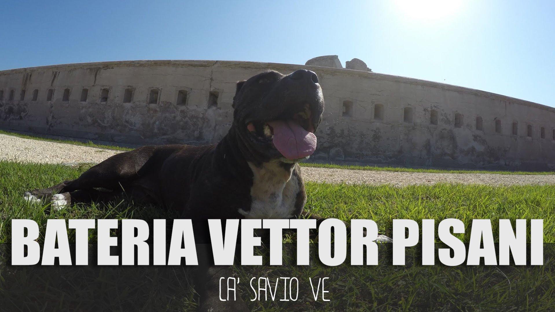 Forte Batteria Vettor Pisani a Ca' Savio VE con American Pitbull Terrier