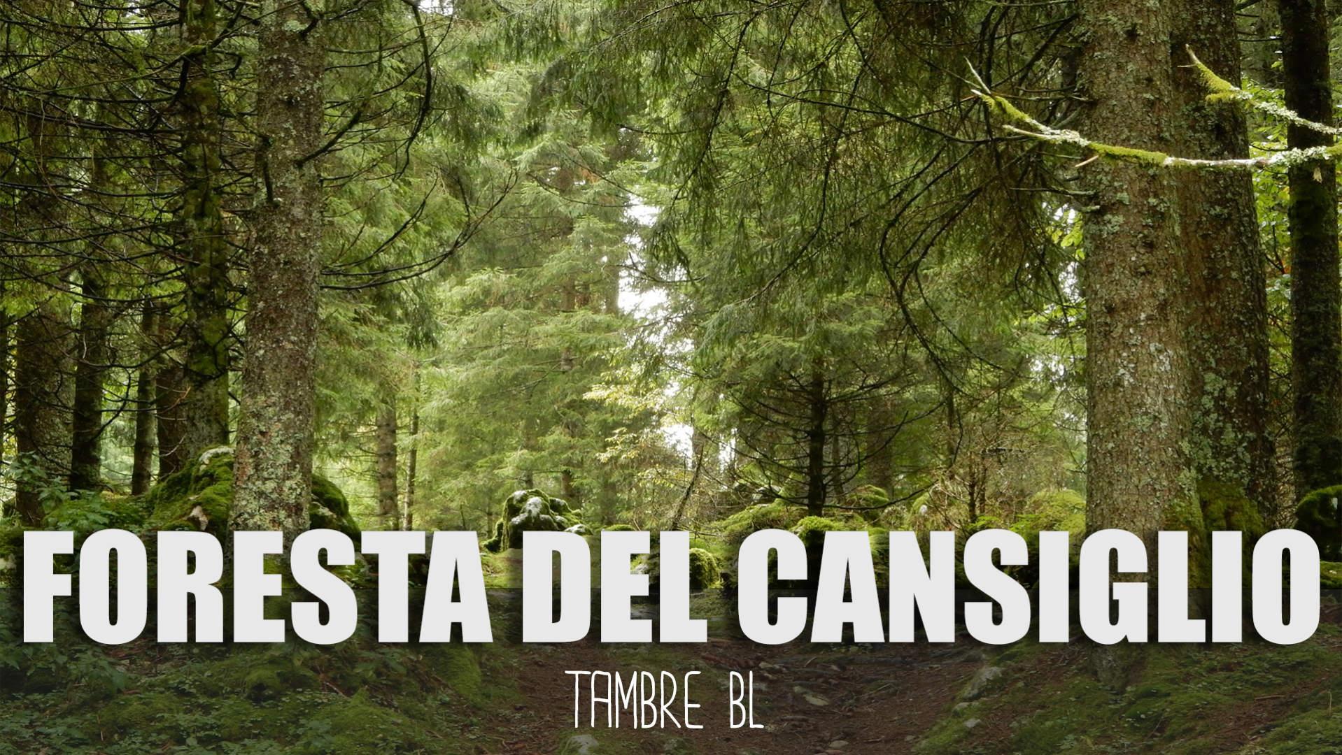 Bosco Foresta del Cansiglio a Tambre BL in Camper