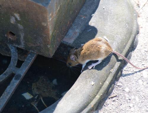 L'invasione dei Topi